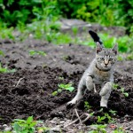 free_cat__by_paper_man-d36bhja